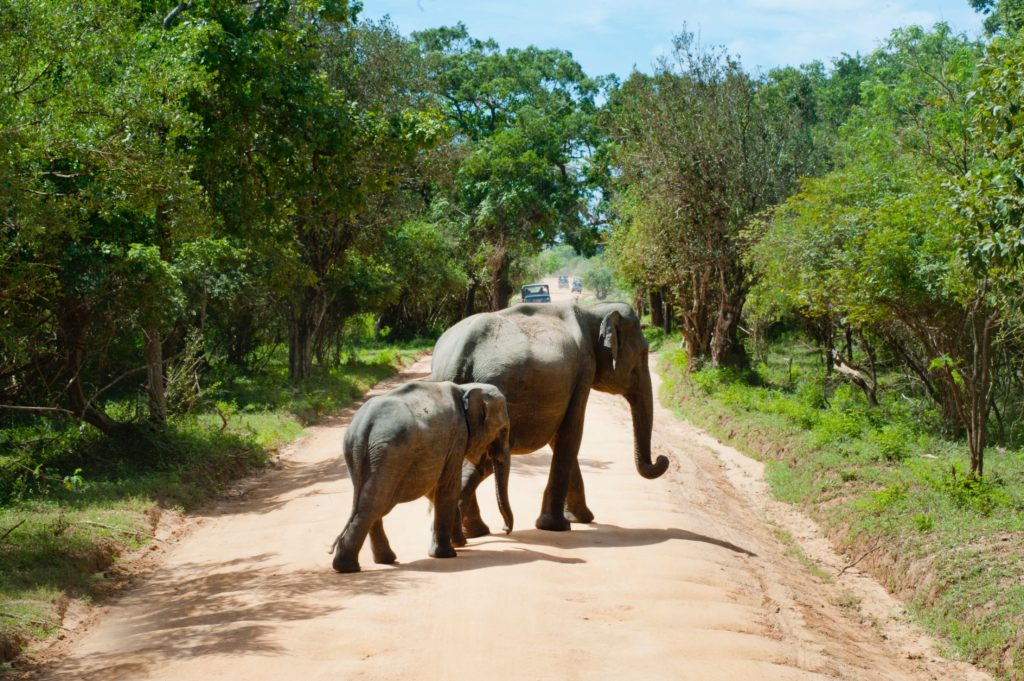 Safari éco-responsable en Afrique